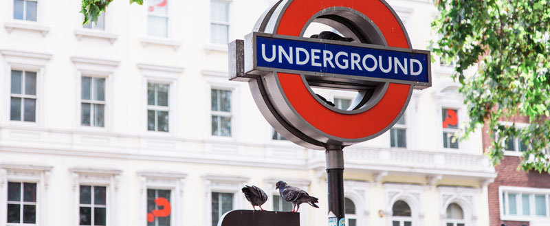 pigeons-on-the-tube