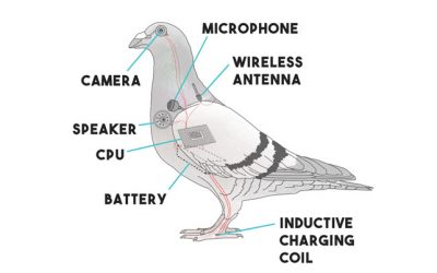 Pigeon Drone – The Surveillance Technology