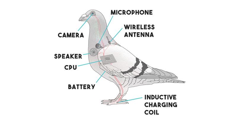 Pigeon Drone – The Surveillance Technology