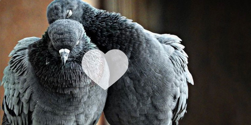 Biotechnology and Pigeon Instincts