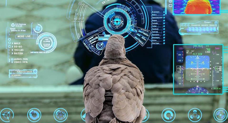 Government Pigeon