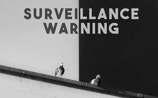 Robotic Bird Surveillance