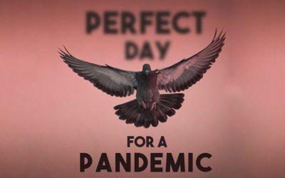 Pigeon Pandemic
