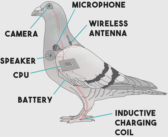 Pigeon drone spies in disguise