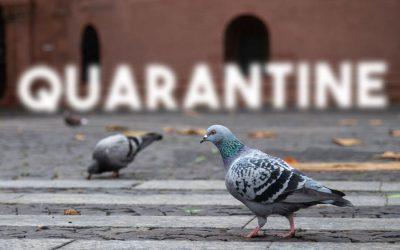 Health Vs Privacy in Quarantine